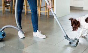 cleaning pet messes